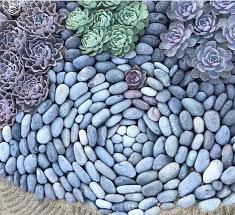 best 25 succulent rock garden ideas on pinterest outdoor cactus