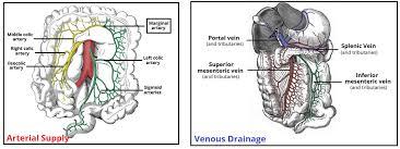 Borders Of The Heart Anatomy The Colon Ascending Transverse Descending Sigmoid