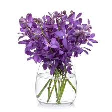 vanda orchid buy vanda cut orchids online bill s fresh flowers