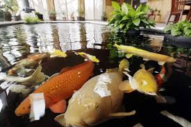 indoor koi pond designs beautiful image of natural koi pond