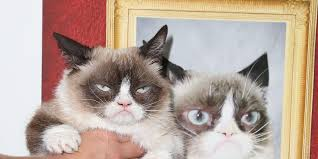 19 Awesome Grumpy Cat Christmas - grumpy cat lives up to her name at the grumpy guide to life book launch