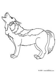 forest wolf coloring pages coloring