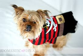 Halloween Costumes Yorkies Pirate Halloween Costumes Family Domestic Diva
