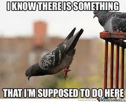 Meme Bird - just a bird being a bird by zebron zee meme center