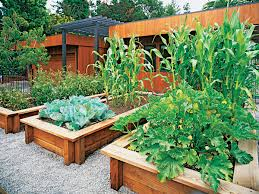 Decorative Vegetable Garden by Veggies Up Front Sunset