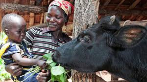 heifer international ending hunger building communities