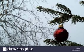 frosted pine tree branch with decoration stock photo