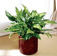 Plants That Survive With No Light Classy 25 Office Plants No Sunlight Design Decoration Of Plants