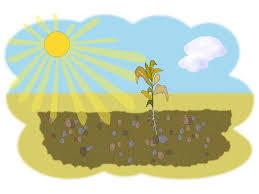 free visuals parable of the sower for young children jesus tells