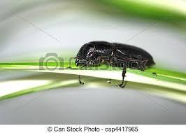 was ist das für ein insekt eine wanze oder was urlaub insekten rehbock insekt wanze käfer rehbock insekt gras wanze