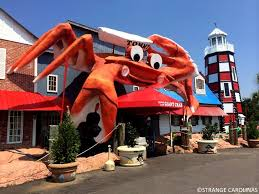 Seafood Buffets In North Myrtle Beach by Tommy The Giant Crab Myrtle Beach Sc Strange Carolinas The