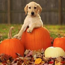 cute pumpkin backgrounds dog ipad air wallpapers hd 07 ipad air retina wallpapers and