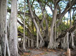 fort myers u2013 travel guide at wikivoyage