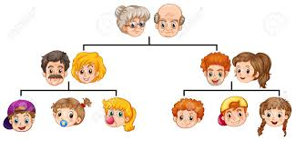 single family tree with heads and faces royalty free cliparts