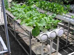The Hydroponic Nutrients  MOORE Important than you May think!