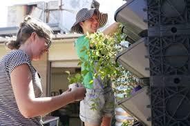 Vertical Garden Adalah - best edible plants for your vertical garden