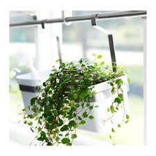 hanging wall planters from ikea great for over the kitchen sink