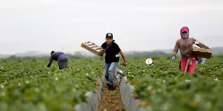 desired for their labor rejected as neighbors farmworkers in