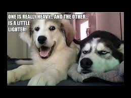 Dog Jokes Meme - deluxe dog jokes meme 10 best bad puns dog memes ever youtube