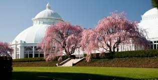 Botanic Garden Bronx by Save 10 On All Garden Passes At The New York Botanical Garden