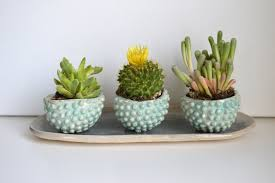 colorful small succulent planters ideas home decorating ideas