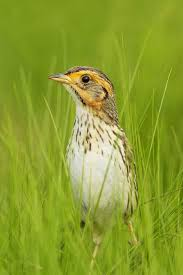 Connecticut birds images Many state birds in decline and one heading for extinction report