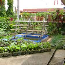 Small Backyard Vegetable Garden by Sweet Vegetable Diversification In Janlud Batuan Bohol