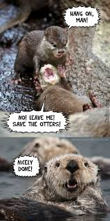 Otter Memes - list of synonyms and antonyms of the word otter memes