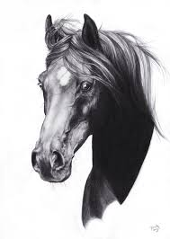 drawn horse beautiful horse pencil and in color drawn horse