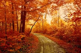 awesome autumn forest track download wallpaper for mobile pin hd