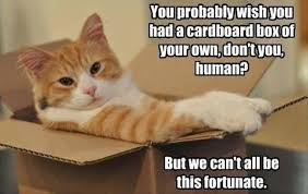 Cardboard Box Meme - from kittens to lions all cats love cardboard boxes 30 pics