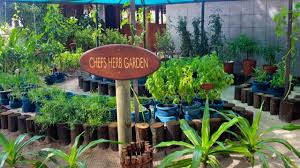 herb gardens the herb garden on kuredu