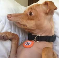 Tuna The Dog Meme - tuna the dog behind the meme album on imgur