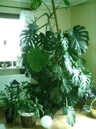 Wohnzimmer Pflanzen Ideen Stunning Grose Bilder Fur Wohnzimmer Ideas House Design Ideas
