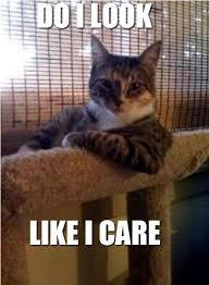Like I Care Meme - do i look like i care cats know your meme