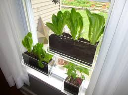window planters indoor survival gardening indoors shtfandgo survival and emergency supplier