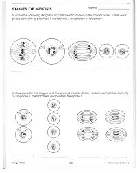 Mitosis Worksheets Black Family Reunion Invitations