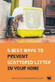 pets news tips u0026 guides glamour best 25 cat care tips ideas on pinterest cat health cat facts