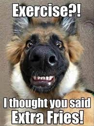 Frowning Dog Meme - pretty 273 best funny dogs images on pinterest wallpaper site