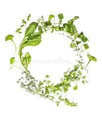 herb wreath herbs wreath on white background stock photo image 47955695