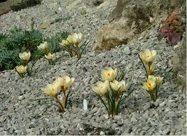 Creating A Rock Garden Creating A New Raised Bed Rock Garden Alpine Garden Society