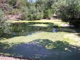 index of images algae web ponds