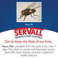 house pest control house fly pest control servall pest control
