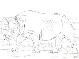 rhino coloring page indian rhino coloring page free printable
