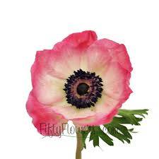 anemone flower may to september delivery