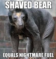 Advice Mallard Meme Generator - shaved bear weknowmemes generator