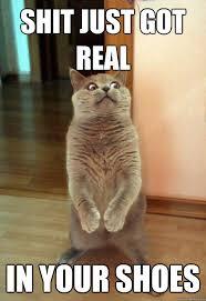 Shit Just Got Real Meme - shit just got real cat meme cat planet cat planet