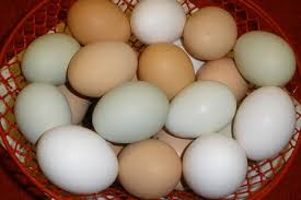 Chickens For Eggs In Backyard 10 Tips For Raising Backyard Chickens For Beginners
