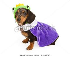 Halloween Costumes Miniature Dachshunds 13 Miniature Dotsons Adorible Images