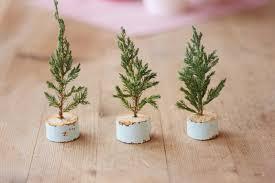 mini trees morning creativity